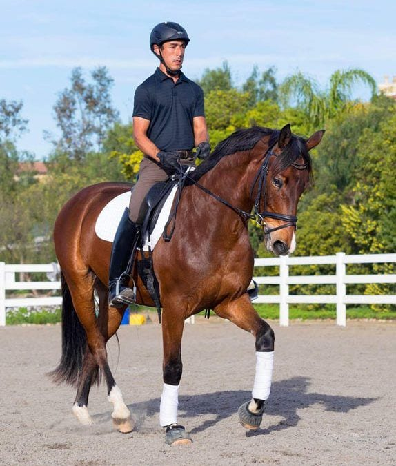 Footing and Arena Company Premier Equestrian has New Mascot Sir Premiero